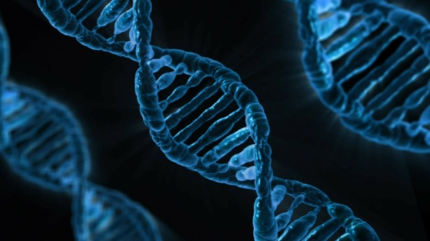 DNA Code for Life - Genesis Creation